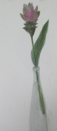 kurukuma1