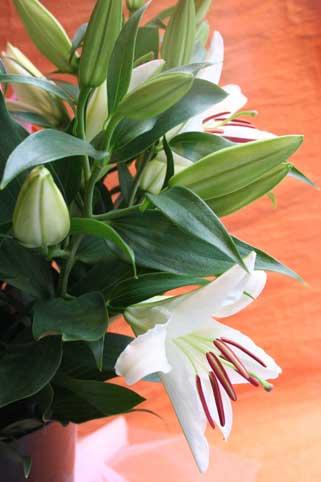 スタンド花 花束 花ギフト 花を贈る フラワーギフト 誕生日花suzukisan2