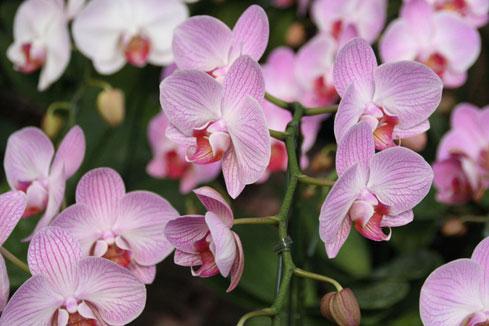 スタンド花 花束 花ギフト 花を贈る フラワーギフト 誕生日花しましま