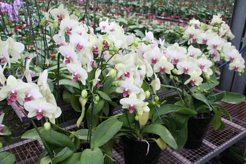 スタンド花 花束 花ギフト 花を贈る フラワーギフト 誕生日花グリーン
