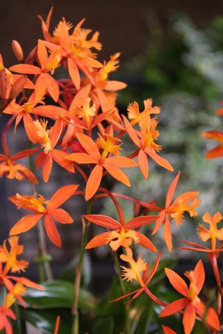 スタンド花 花束 花ギフト 花を贈る フラワーギフト 誕生日花エピ