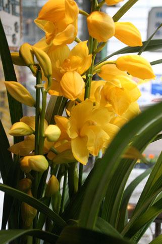 スタンド花 花束 花ギフト 花を贈る フラワーギフト 誕生日花黄色