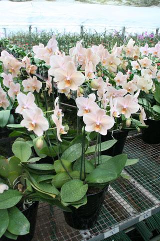 スタンド花 花束 花ギフト 花を贈る フラワーギフト 誕生日花オレンジ