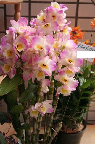 スタンド花 花束 花ギフト 花を贈る フラワーギフト 誕生日花デンドロ
