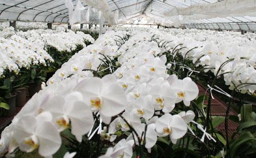 スタンド花 花束 花ギフト 花を贈る フラワーギフト 誕生日花畑