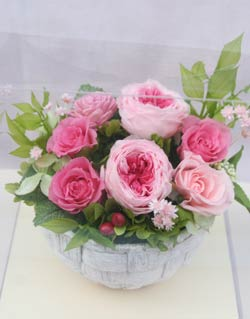 pri_garden_rose_p