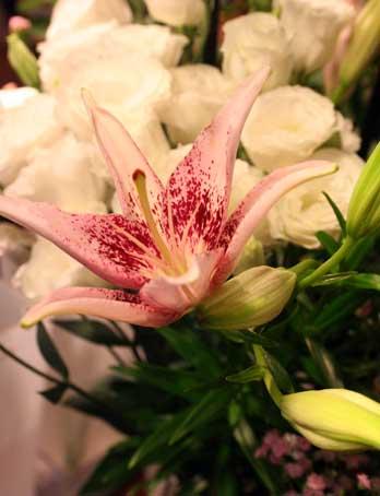 スタンド花 花束 花ギフト 花を贈る フラワーギフト 誕生日花すかしゆり