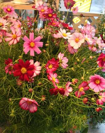 スタンド花 花束 花ギフト 花を贈る フラワーギフト 誕生日花kosumosu