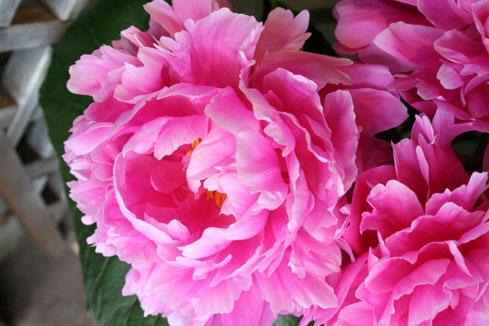スタンド花 花束 花ギフト 花を贈る フラワーギフト 誕生日花芍薬1