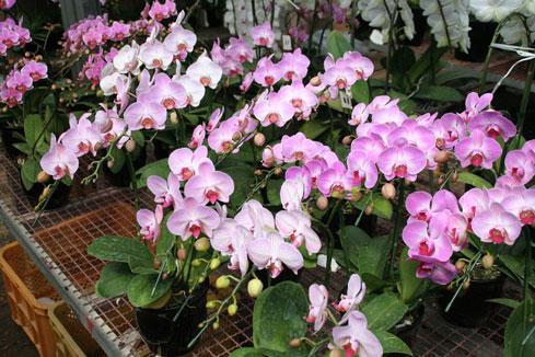 スタンド花 花束 花ギフト 花を贈る フラワーギフト 誕生日花ピンク
