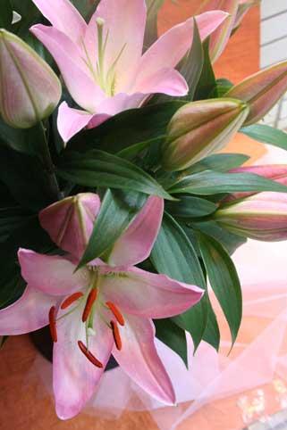 スタンド花 花束 花ギフト 花を贈る フラワーギフト 誕生日花suzukisan1