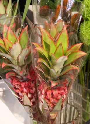 ananasu
