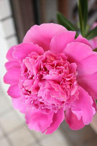 スタンド花 花束 花ギフト 花を贈る フラワーギフト 誕生日花芍薬2